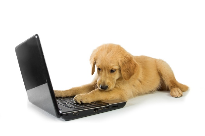 A Golden Retriever with a laptop isolated on white background, c